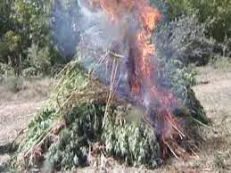 drug_fire_130613